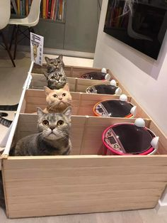 Cat Care Tips Fat Dad Cat Was Eating More Than His Share — So His Owners Got Creative - The Dodo - He'd been hogging the food during mealtime. Toxic Plants For Cats, Herding Cats, F2 Savannah Cat, Cat Feeder, Cat Room, Pet Furniture, Pet Care, Cute Cats, Totoro