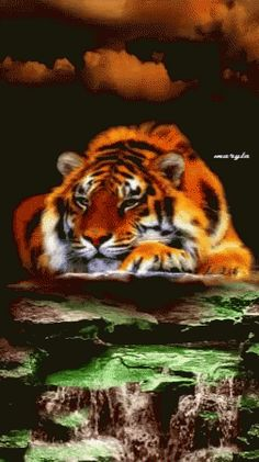 The perfect Tiger Water Animated GIF for your conversation. Discover and Share the best GIFs on Tenor. Tiger Images, Tiger Pictures, Animals Images, Funny Animals, Cute Animals, Big Cats Art, Cat Art, Beautiful Cats, Animals Beautiful