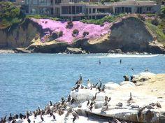 Bird Rock La Jolla