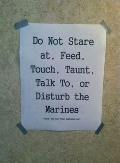 Please do not stare at, feed, touch, taunt or disturb the Marines Marine Quotes, Usmc Quotes, Marine Corps Humor, Us Marine Corps, Military Jokes, Military Life, Military Terms, Once A Marine, Marine Mom