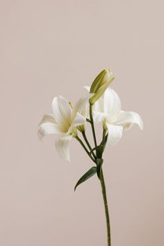 Your Guide To Sustainably-Farmed Flowers For Mother's Day Growing Flowers, Cut Flowers, Planting Flowers, Beautiful Flowers, Growing Lilies, My Flower, Flower Art, Flower Power, Flowers For Everyone