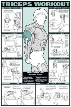 posters for workout training tricep   Item: Chart Series II Triceps Workout Poster