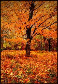 ✯ fall, the most beautiful time of the year~  as well as spring.....winter....oh, and summer!