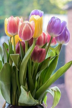 Spring And Easter Celebration - Tulips Tulips Garden, Tulips Flowers, My Flower, Daffodils, Spring Flowers, Flower Art, Planting Flowers, Beautiful Flowers, Share Pictures