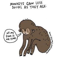 Monkeys #sadanimalfacts #metoo