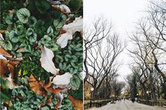 #NYC Végétale #lesdemoizelles