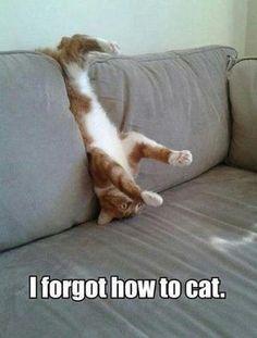 LOL - Cats