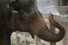San Antonio Zoo - Google Search