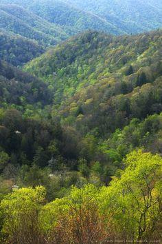 Image detail for -Appalachian hardwood forest, Great Smoky Mountains National Park, North Carolina, USA.