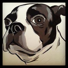 Boston Terrier sketch.  by Chris Zahner