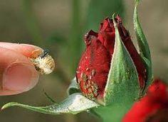 7 astuces écolo contre les insectes nuisibles au jardin
