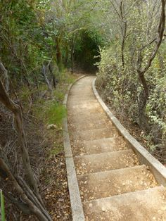 THE Giant Steps   512   Reportedly The Longest Set Of Stairs In Los Angeles