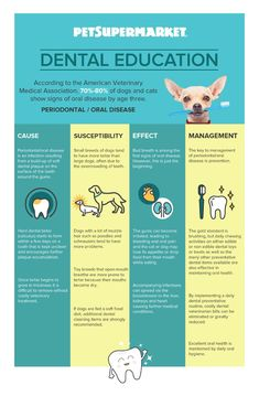 Top Oral Health Advice To Keep Your Teeth Healthy. Unluckily, picking the best dental care tips migh Teeth Health, Oral Health, Health Care, Bone Health, Pet Supermarket, Dental Health Month, Dental Facts, Teeth Cleaning, Health Facts
