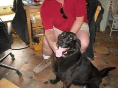 Petango.com – Meet Lakita, a 12 years 9 months German Shepherd / Retriever, Labrador available for adoption in Buffalo, WY
