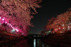 Sakura Toyama Japan