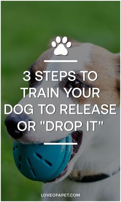 Training Your Puppy, Dog Training Tips, Pet Puppy, Dog Cat, American Alsatian, Dog Commands, Dog Games, Cute Funny Dogs, No Rain