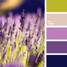 Cool - gentle lavender - color of fresh greenery, color of lavender, color of young greenery, dark blue and violet, gentle lavender, lavender and light green, light green, lilac, pastel lavender, shades of violet, violet and light green.