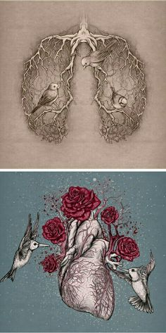 Illustrations by Katerina Eremeeva Heart lungs anatomy art Kunst Inspo, Art Inspo, Lapin Art, Wow Art, Anatomy Art, Art And Illustration, Medical Illustration, Heart Art, Oeuvre D'art