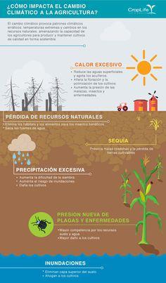 cambio climatico infografia guatemala - Google Search