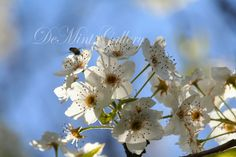Floral in the Sky, Landscape Print, Flowers, Blooms, Tree Blossoms, Photography, Color Print, KP355 by DeMintGallery on Etsy