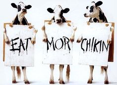 #eat #more #chicken this message is sponsored by the #cow #federation #habal #هبل #habaldotcom