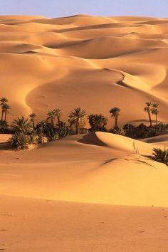 El desierto muestra que es en su mayoría de arena con un par de palmeras. El sol se refleja el calor de la arena que hace que sea muy caliente, con el sol también te mantiene hirviendo, así!