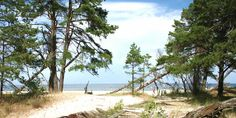 jurmala photos - Pine dunes in jurmala - jurmala pictures