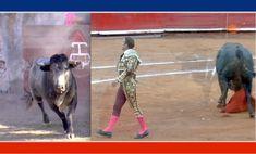 CONTENIDO: _____________________________________________________ - Los Cués (Querétaro). Miércoles 30 de Enero. Reportaje en la ganadería de Pedro Garfias, quien ofreció declaraciones contundentes. Los invitados de honor en la tienta el Matador Edgar García 'El Dandy' y José Arcila. _____________________________________________________ - Monumental México. Domingo 27 de Enero. Toros de Villa Carmela. Diego Silveti. Antonio Ferrera. Tv, Animals, World, January 27, Domingo, Animales, Animaux, Animal Memes, Animal