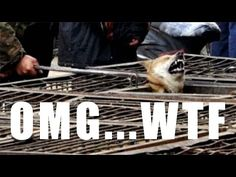 Shocking Cruelty of South Korean Dog Meat Industry(Undercover Video by Stop It! Korea) - YouTube