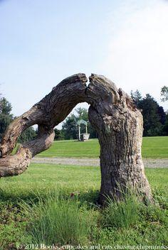 Au hasard de l'Etat de New York : l'arbre mort et le puits