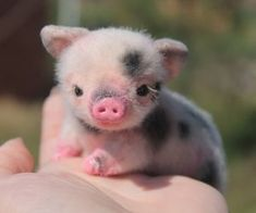 Very Cute Baby Animals Pictures Baby Farm Animals, Cute Wild Animals, Baby Animals Super Cute, Baby Animals Pictures, Cute Little Animals, Cute Animal Pictures, Cute Funny Animals, Cutest Animals, Pretty Animals
