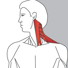Stand upright while keeping your shoulders still and your head up. Slowly rotate your chin towards your shoulder.