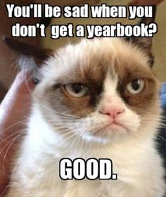 Funny pictures about Grumpy Cat finds Nemo. Oh, and cool pics about Grumpy Cat finds Nemo. Also, Grumpy Cat finds Nemo. Grumpy Cat Quotes, Grumpy Cat Humor, Cat Memes, Funny Memes, Grumpy Kitty, Memes Humor, Funny Quotes, Funny Videos, Cats Humor