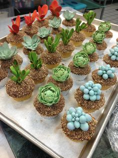 Gorgeous succulent cupcakes for a special order today! Everyone please go follow us on Instagram, our username is christophergarrens