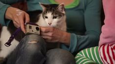 A cat is fitted with a video camera and you won't believe what he gets up to in the Superchunk music video for their song Crossed Wires (2011).