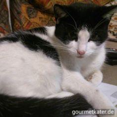 Kitti findet es heute auf der Couch angenehmer. #cat #cats #katze