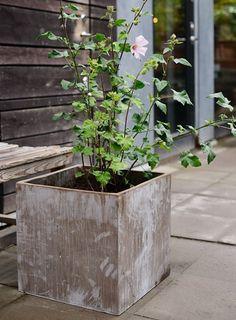 Hos oss på Zetas Trädgård hittar du Sveriges största sortiment av trädgårdsväxter...