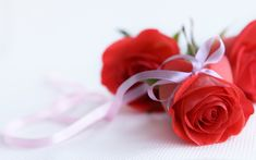 Rose flower wallpaper backgrounds dowload