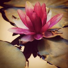 With roots secured in the mud, a stem that grows through the water, and a flower that lies pristinely above, the lotus signifies the progression of the soul. Inspiring us to rise from the darkness into enlightenment.