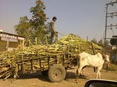 indian village life - The Bullock Cart is still an important mode of transport