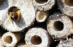 Free guide - Make your own Bee Hotel.