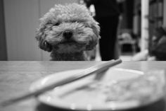 I wanna eat,too.