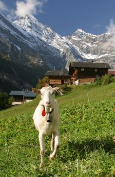 Hike in the Swiss Alps on Day 5 of the Rick Steves Best of Germany, Austria & Switzerland Tour.