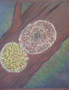 waldorf lichen - Pesquisa Google
