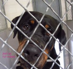 CA Baldwin Park Shelter Dog - Past Euth Date - Please Share - Adopt or Foster to Save