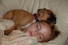 Precious snuggle baby. Boxer puppy