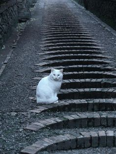A White Cat on stairs in Siena, Tuscany, Italy.