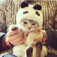 cute cats 20+ . for more http://artonsun.blogspot.com/2015/03/cute-cats-20-for-more.html