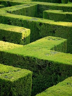 Behind the hedges ...