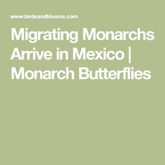 Migrating Monarchs Arrive in Mexico | Monarch Butterflies